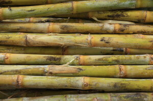 photodune-4576164-sugar-cane-xs