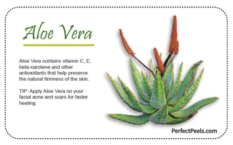 aloe vera for natural skin care